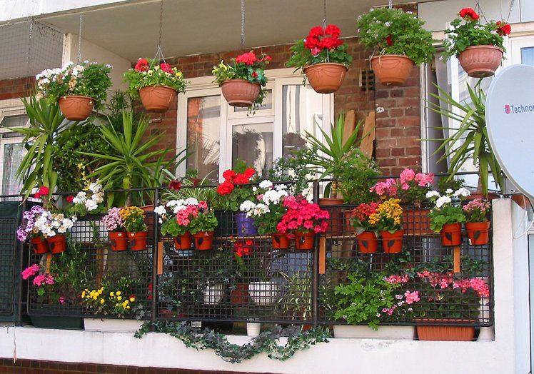 мини-оранжерея на балконе