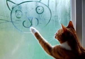 Пластиковые окна и конденсат