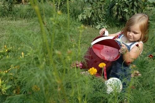Оформление детской площадки растениями