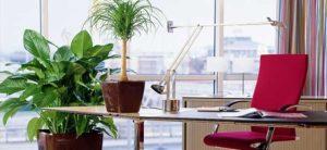 Живые цветы в интерьере офиса